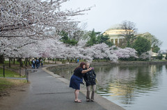 2015 cherry blossoms at the Tidal Basin (Tim Brown's Pictures) Tags: 2015 washingtondc tidalbasin cherryblossoms jeffersonmemorial spring coldweather washington dc unitedstates tidal basin cherry blossoms