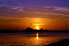 Tres colores (portalealba) Tags: zaragoza zaragozaparque ebro aragon españa spain sunset sol silueta portalealba canon eos1300d 1001nights 1001nightsmagicwindow agua atardecer nwn