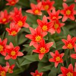 Dutch Spring thumbnail
