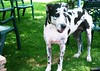 Bello ejemplar canino..P1150677P (gtercero) Tags: 20180415 perro gtercero