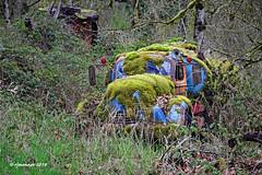 Mired in Moss_187200 (rjmonner) Tags: truck antique buried moss blue stateofwashington washington northwest wet rain overgrown rainforest tarp bluetarp rearviewmirrors horn rural green woods rusted preserved restore vintage relic tanker