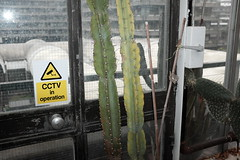 Barbican conservatory (Gary Kinsman) Tags: aridroom sign cctv fujix100t fujifilmx100t london 2018 candid streetphotography cityoflondon ec2 barbican conservatory barbicanconservatory flash plant catus succulent window
