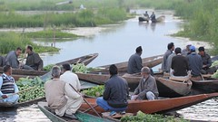Expectant (Nagarjun) Tags: floatingvegetablemarket flowers dallake kashmir srinagar commerce trade veggies kohlrabi dawn morning sunrise green