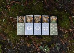 (free_dragonfly) Tags: toys miniature jackalope rabbit gold brown embroidery stars animals handmade felt toyphoto cute tiny matchbox