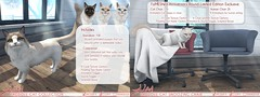 JIAN Ragdoll Cats ( FaMESHed May 2018) ([JIAN]) Tags: secondlife mesh animals jian pets cats kitties kitty cat companion wanderer