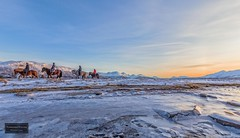 Riding in the arctic (Torbjørn Tiller) Tags: tisnes kvaløya tromsø troms norge norway riding horse winter arctic ice