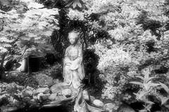 black&white (elag.1) Tags: sonne frühling bäume natur sträucher wasser steine skulpturen bearbeitung