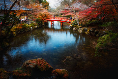 Wooden bridge in the pond, Autumn park (Patrick Foto ;)) Tags: autumn background beautiful beauty bridge color colorful environment fall foliage forest garden green japan japanese kyoto landscape leaf light morning nature new november october orange outdoors park path plant pond red season stream swamp tranquil tree water waterfall yellow kyōtoshi kyōtofu jp