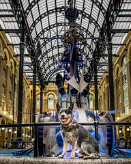 20171016-DSCF2954 Shopping, Rupert? (susi luard 2012) Tags: battlebridge esslinger galleria hays rupert se1 lane london uk