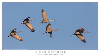 Five Cranes, Morning Sky