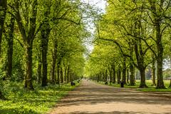 Haslam Park (shabbagaz) Tags: great britain united kingdom 2018 a65 alpha city england haslam lancashire may north park preston shabbagaz sony spring uk west greatbritain unitedkingdom