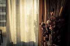 MG7347 (eleni.makrydaki) Tags: decorating indoor flowers shadows sunset