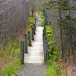 DSC00231 - Trail to the Rock thumbnail
