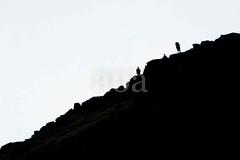 H509_7973 (bandashing) Tags: dark light bw black white hills dovestone silhouette sylhet manchester england bangladesh bandashing aoa socialdocumentary akhtarowaisahmed