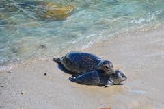 Pacific Grove - Monterey - California (TravelMichi) Tags: californa california travel usa2018
