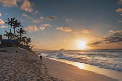 Nui (hitmanfre1) Tags: northshore north shore hawaii sunset beach sunsetbeach sun cloud clouds wave waves ocean sea seascape water pacific sand palm tree palmtree oahu nikon d7200