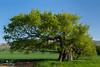 Tree (geraintparry) Tags: nikond500 d500 nikon sigma south wales landscape outdoor nature naturephotography geraint parry geraintparry lower machen lightning