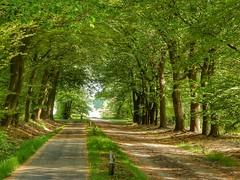 Sallandse Heuvelrug (sander_sloots) Tags: sallandse heuvelrug holten nijverdal forest trees bomen bos road weg