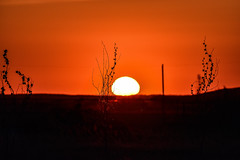 Orange Delight (darletts56) Tags: sky orange sun white sunset silhouette pole tree trees prairie evening sundown