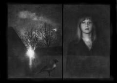 The hurt bird. (andredekok) Tags: film woman scaldcrow mystery dreamlike textures sundown