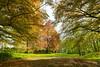 Frühling auf dem Aremberg (clemensgilles) Tags: trees beautiful bäume eifel spring germany deutschland