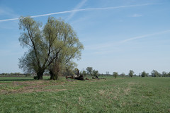 Drzewa (WMLR) Tags: bąkówgórny województwołódzkie polska pl hd pentaxd fa 2470mm f28ed sdm wr pentax k1