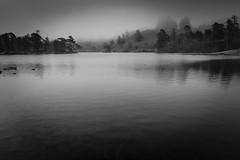 Tarn Hows (davidglossop) Tags: tamron2470g2 grey water england tarnhows mist trees lakes monochrome d750 nikon