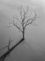 Dead Tree Shadow (Scottmh) Tags: aerial australia autumn centr dead dji latrobe lake mavic melbourne pro tree trees victoria uni water wood shadow