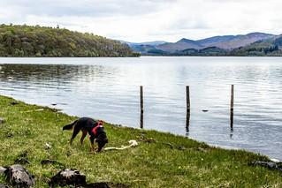 Kiri finds a stick