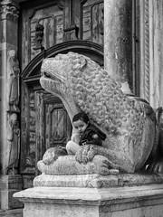 Nelle fauci del predatore (Riccardo Palazzani - Italy) Tags: cremona church cathedral duomo piazza torrazzo leone marmo marble child lombardei ロンバルディ 伦巴第大区 lombardie ломбардия lombardia لومباردي 롬바르디아 italia italie italien italy 이탈리아 италия itália italië イタリア italya 意大利 إيطاليا riccardo palazzani veridiano3 olympus omd em1 lion statua bambino bimbo baby street chiesa église كنيسة 教堂 教会 igreja церковь iglesia kirche