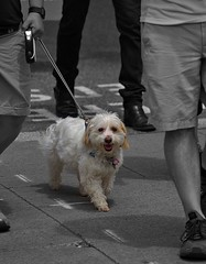 Are Dogs Color Blind? (Scott 97006) Tags: dog canine animal pet cute color perception