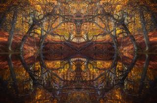 Woodland Reflection Craziness