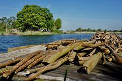 DSC06625 (hofsteej) Tags: middendelfland holland netherlands zuidholland vlaardingervaart broekpolder natuurmonumenten may