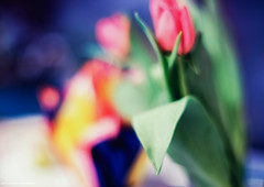 Tulips. (Hayk Senekerimyan) Tags: flower tulip tulips bokeh blur leaves colorful nikkor fujifilm 85mm nikkoraf85mmf18d stilllife soft fuzziness home