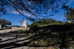 Près du Moulin... (Elyane11) Tags: moulin ombres pins alphonsedaudet