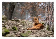 Parc animalier d'Auvergne (BerColly) Tags: france auvergne puydedome ardessurcouze parc parcanimalier bercolly google flickr