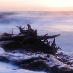 wave meets tree II thumbnail