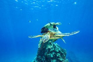 turtle1Mar29-18