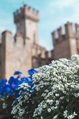 Medieval Beauty (DanAie) Tags: sirmione italia italy flower flowers outoffocus castle history blue white travel travelphotography beautiful pentax photography photographer streetphotography street