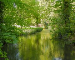 River Meon (1 of 1) (Geoffrey Radcliffe /radcliffe.geoffrey@gmail.com) Tags: geoffrey radcliffe lightroom5 nikon coolpix b700 river meon exton hampshire uk england