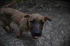 Bibi0516-2079 (adam.leaf) Tags: canon 6d 24105l leafling forest dog
