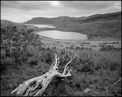 a tree and a view (nahlinse) Tags: film travel landscape fujineopanacros analog tree film:brand=fuji film:name=fujineopanacros100 ireland donegal