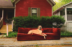 No. 111 of #sofasinthewild (moke076) Tags: nikon d7000 fawn dog animal pet moose great dane couch sofa abandoned sofasinthewild atlanta georgia sideoftheroad trash sidewalk rust cabbagetown old mill house red velvet velour
