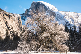 Elm Tree Branches Glistening in Fresh Snow! Cook's Meadow Elm Tree Sunrise Yosemite National Park Winter Snow Fine Art Photography 45EPIC Dr. Elliot McGucken Fine Art Landscape and Nature Photography!