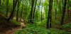 Österreich / Austria: Perchtoldsdorf (CBrug) Tags: wienerwald viennawoods selvaviennese wald wood forest baum tree pflanze outdoor arbre árbol albero boom drzewa δέντρο де́рево wien perchtoldsdorf wandern hiking wanderung randonnée landscape natur nature green grün wanderweg trail holz totholz
