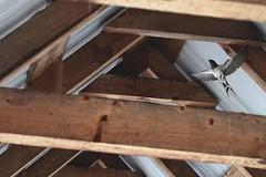 wings (HalcyonPhotos) Tags: bird flying wings flight nest bridge