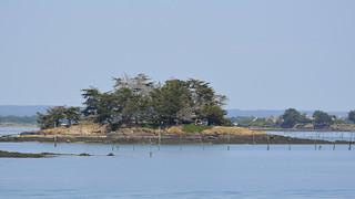 2017.06.14.062 GOLFE du MORBIHAN - Île Mouchiouse
