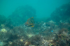 20180422-DSC_0134.jpg (d3_plus) Tags: landscape d700 nature fish marinesports apnea zoomlense 185mm izu sea port j4 skindiving 自然 nikon1 景色 風景 魚 ニコン1 watersports wpn3 drive daily マリンスポーツ japan fishingport ニコン 50mmf18 50mm dailyphoto nikonwpn3 nikon 素潜り ウォータープルーフケース 水中 nikkor sky スキンダイビング nikon1j4 漁港 underwater 海 snorkeling nikond700 地形 scenery 息こらえ潜水 ズーム 1nikkor185mmf18 eastizu 185mmf18 空 日本 東伊豆 waterproofcase シュノーケリング diving