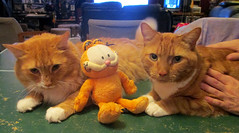 20170806 1328 - yardsale haul - cats & Garfield - IMG_2768