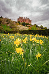 Daffs at Castle (Howie Mudge LRPS BPE1*) Tags: flowers daffodils grass powiscastle castle grounds hedge sky clouds moodysky outside outdoors greatoutdoors welshpool powys wales cymru uk landscape nature ngc nationalgeographic sony sonya7ii sonyalphagang sonyilca77m2 fotodioxproadapter canon1740mmf4l adaptedlens adaptedglass